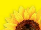 Zlatni suncokret - Vitalova nagrada