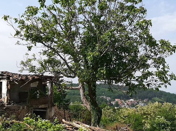 Rodna kuća Miodraga B. Protića tužna ruševina